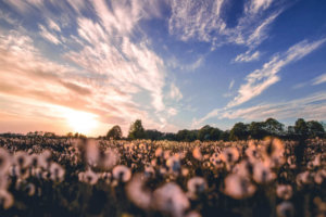 Canva---Nature-Photography-of-Flower-Field